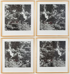 Bird Dog Suite, 1990
