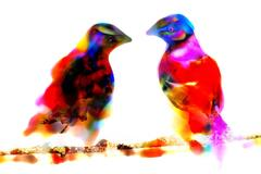 Two Birds - Limited Platinum Edition of 149