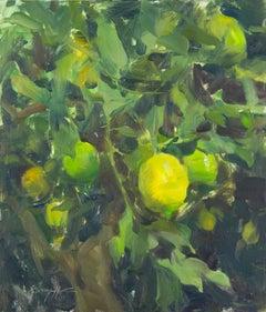 California Lemon Tree