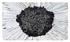 Shallow Field Sluggo (black in a void)