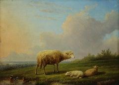 Sheep in Landscape