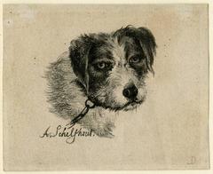 Untitled. Dog's head.