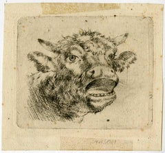 Untitled - Head of a mooing cow.