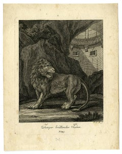 Junger brullender Lowe - Depiction of a young lion, roaring.