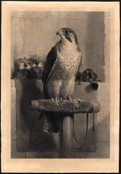 The Hawk.