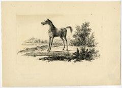 Etude de Cheveaux inventee & lithographie par Vinkeles et Bemme, Rotterdam 1825.