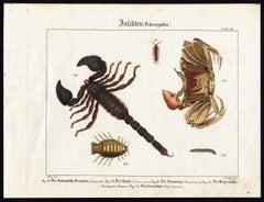 Plate IX: 'Insekten.