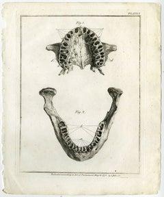 Historia naturalis dentium humanorum […].