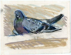 Untitled - A sitting pigeon/dove.