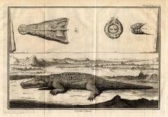 Set of 4 engravings: Crocodile [...].