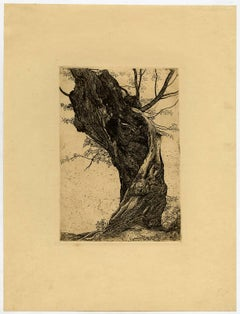 Untitled - Large willow tree.