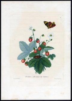 Fraises - L'Ecaille de tortue', Strawberries - Tortoiseshell butterfly.