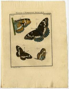 Classis I. Papilionum Diurnorum. Tab. XXXIII.
