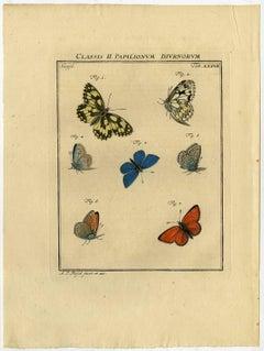 Classis II. Papilionum Diurnorum. Tab. XXXVII.