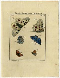 Classis II. Papilionum Diurnorum. Tab. XLV.
