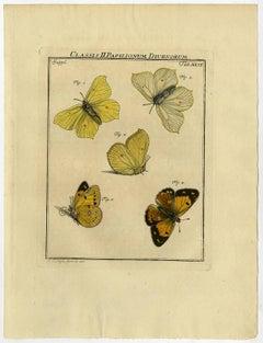 Classis II. Papilionum Diurnorum. Tab. XLVI.