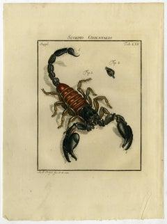 Scorpio Orientalis. Tab. LXV.