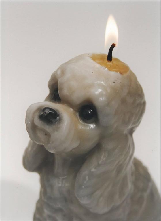 Candle/Dog