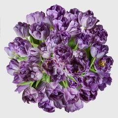 April Purple Tulips