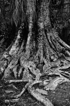 "Blessing for the Trees, Black and White Photography by Indian Artist ""In Stock"""