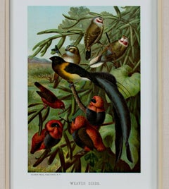 """Weaver Birds,"" Original Color Lithograph by Louis Prang"