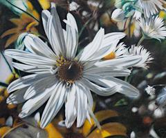 Untitled (Daisy Close Up)