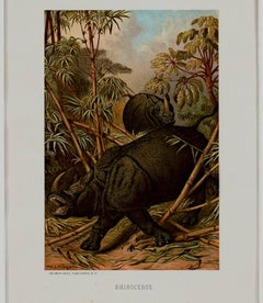 """Rhinoceros,"" an Original Color Chromolithograph by Louis Prang"