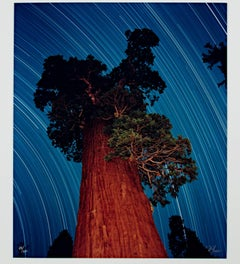 """Giant Sequoia Star Trail,"" a Photograph signed by Robert Kawika Sheer"