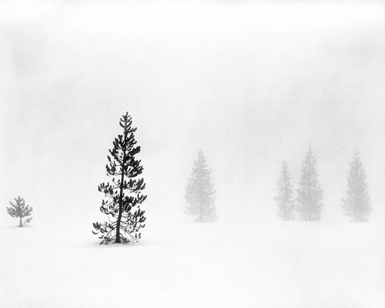 Trees in Fog II
