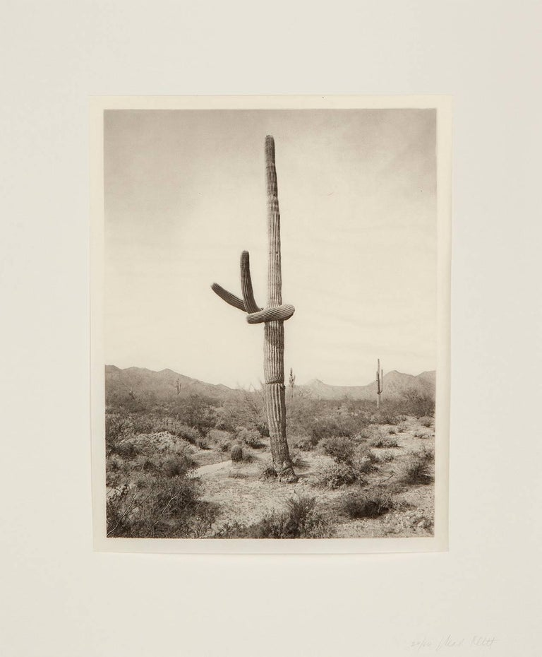 Mark Klett Figurative Print - Saguaro Diptych: 5 16-1 and 5 16-4