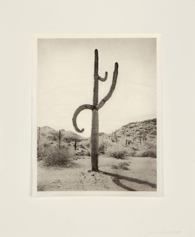 Saguaro Diptych: 5 16-1 and 5 16-4 - Print by Mark Klett