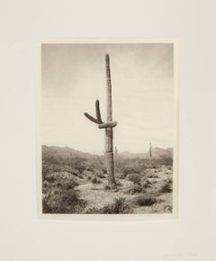 Saguaro Diptych: 5 16-1 and 5 16-4