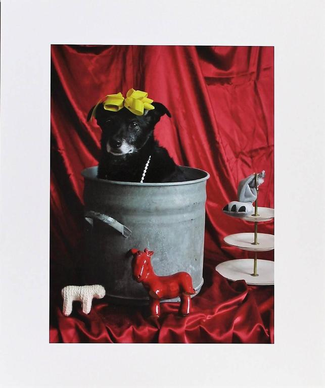 Thorsten Brinkmann Figurative Photograph - La Belle dü Topf - Ernie, Portraits of a Studiodog