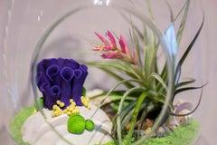 Anthozoa Terrarium (Purple)