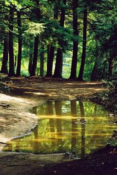 Mud Puddle; Cielo, Burnsville, NC- Photograph