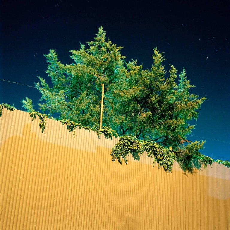 Miska Draskoczy - Fluorescent Tree 1