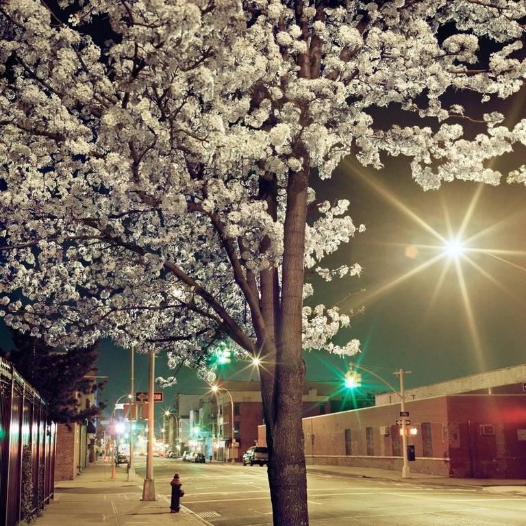 Miska Draskoczy Landscape Photograph - Night Blossoms