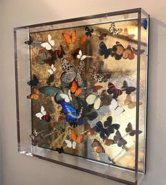 Corolla Burst III, installation art, butterflies, perspex, mirror , mixed media