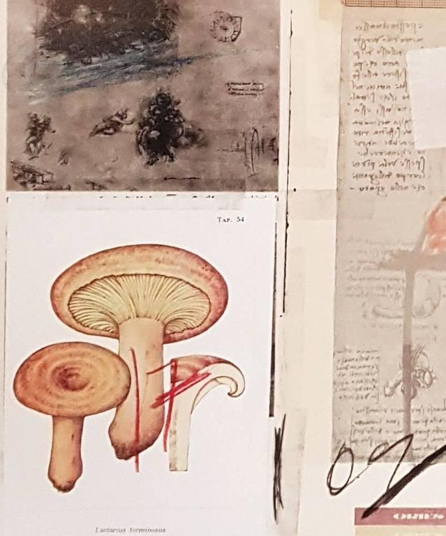 Natural History Part 1 Mushrooms n. X - Original Mixed Media by Cy Twombly For Sale 1