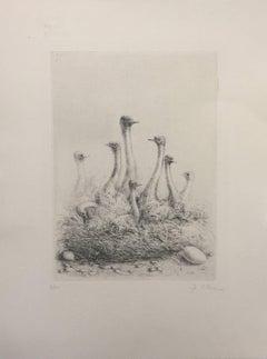 The Ostrichs