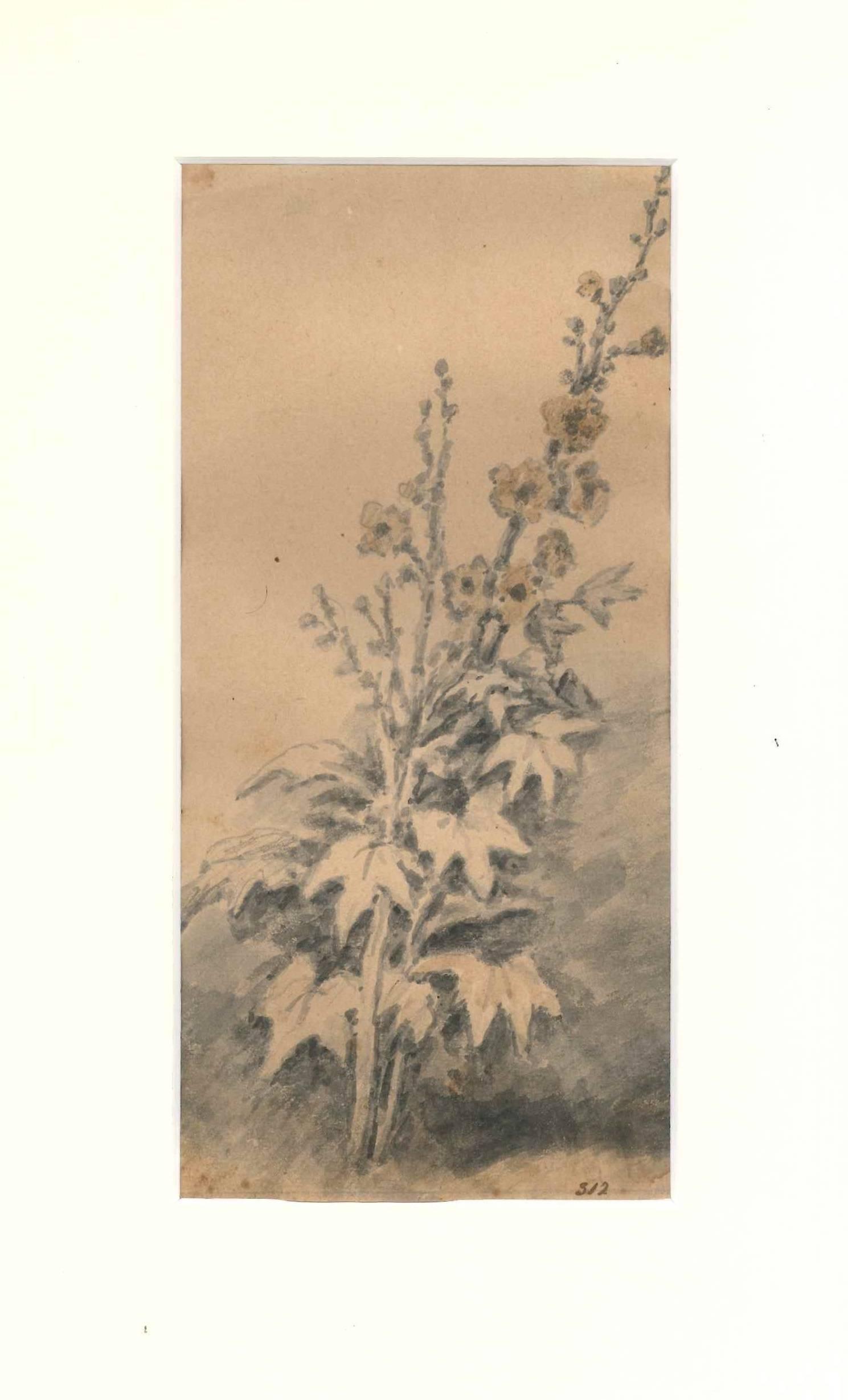Flora Study - Original Drawing by J. P. Verdussen - End of 18th Century