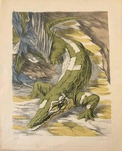 Creek and Crocodile