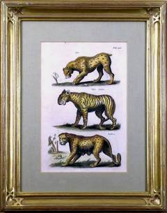 Tab. LIV.  Lynx, Tigris, Panthera