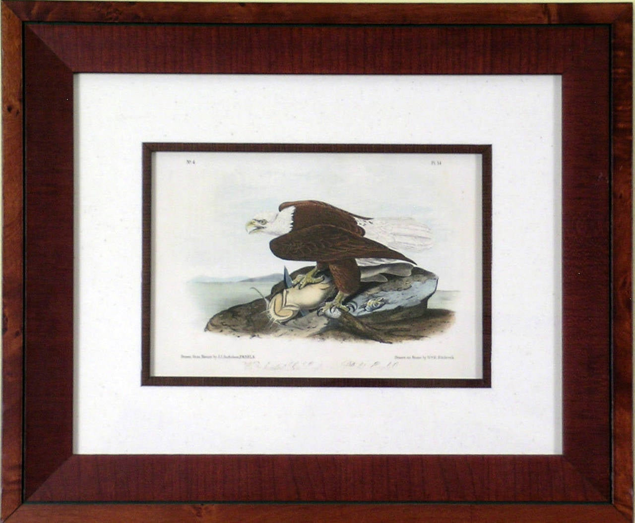 John James Audubon Birds Eagle