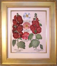 Malva hortensis flore...  (Hollyhock, Mallow)