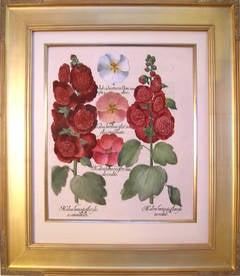 Malva hortensis flore...