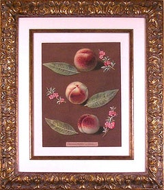 Peaches XXXIV