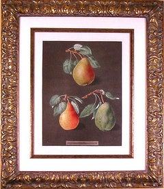 Pears  LXXXII