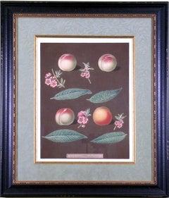 Peaches XXVI