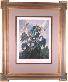 Oblique-leaved Begonia